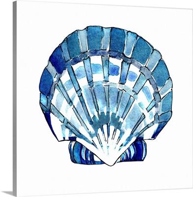 Tidal Pool Shell