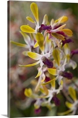 Tropical Garden Orchids