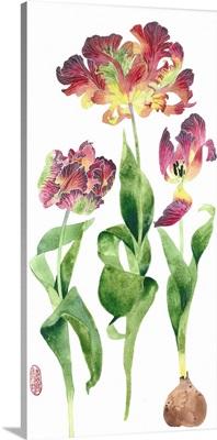 Tulip Study I
