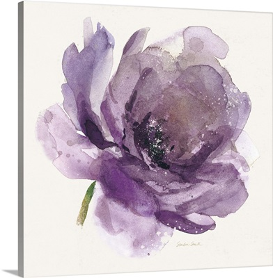 Watery Plum Bloom on White I