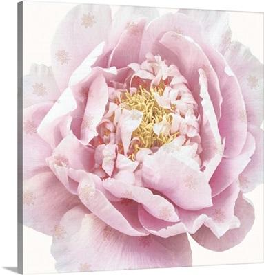 Whisper Floral