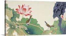 Lotus and Birds