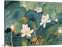 Sweet Lotuses