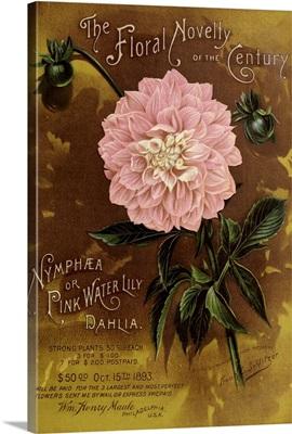 1893 Maule Nymphea