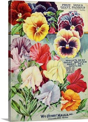 1915 Maule Seeds Pansies