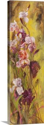 Bearded Iris II