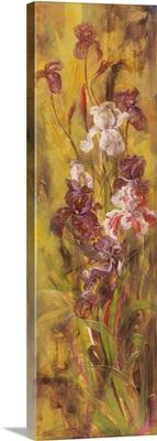 Bearded Iris III