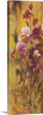 Bearded Iris IV