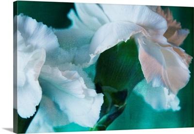 Bright White Carnations I