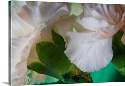 Bright White Carnations II