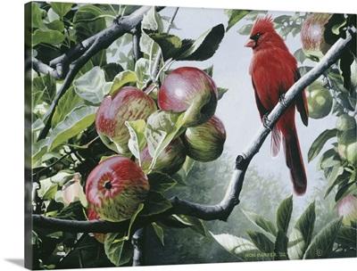 Cardinal And Apples