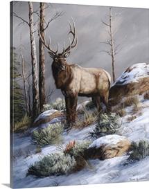 Cold Ridge Watcher