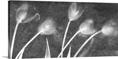 Flores Congeladas 3646