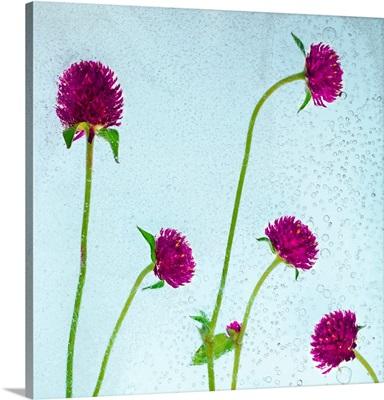 Flores Secas 36