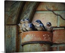 Flower Pot Swallows