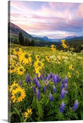 Flowery Plains