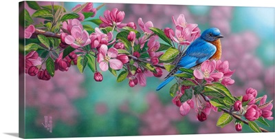 Garden Sapphire - Bluebird