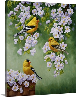 Goldfinch Blossoms