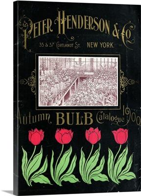 Henderson Tulips