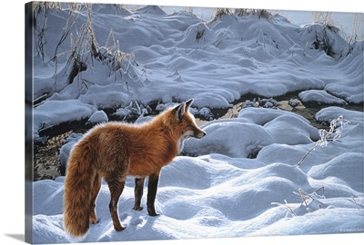 Icy Morning- Red Fox