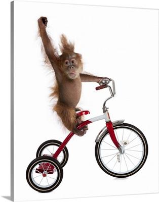Monkeys Riding Bikes II