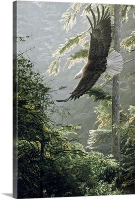 Morning Flight - Eagle
