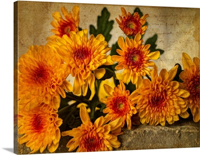 Mums on a Wall