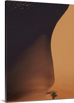 Namibia The Dune