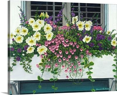 Nantucket Bloom