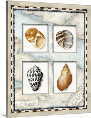 Nautical Shell Collection I