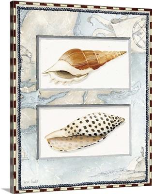Nautical Shell Collection II