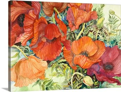 Orange Poppies