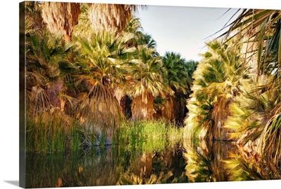 Palms Reflecting