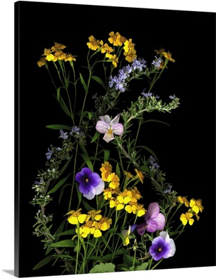 Pansy, Rosemary And French Tarragon