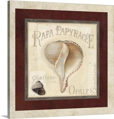 Rapa Papyracee
