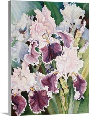 Ruffled Burgundy Iris'