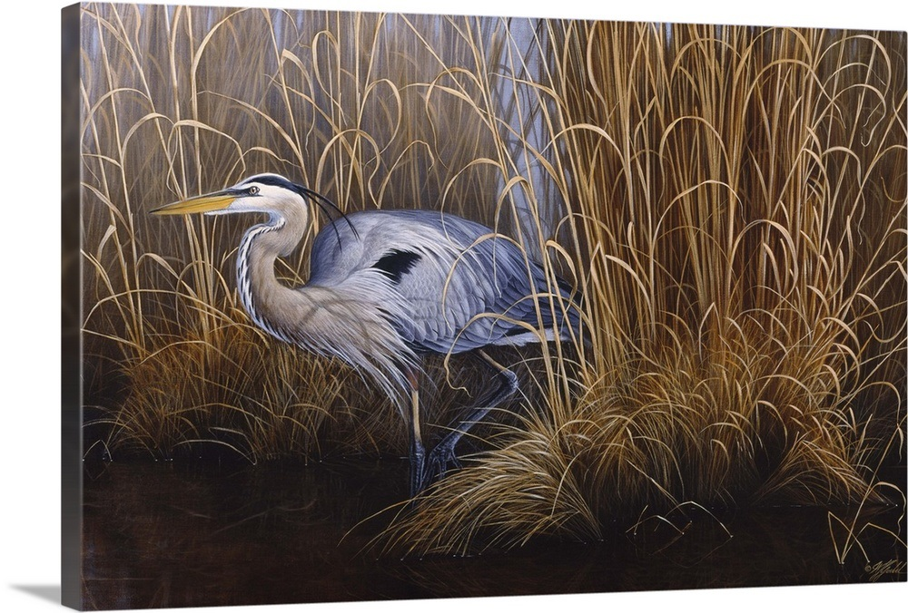 Set In Gold Great Blue Heron