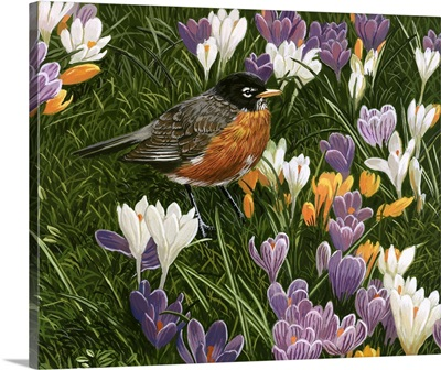 Springtime Robin With Crocus