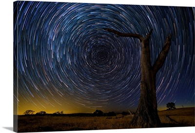 Star trails over the wilderness