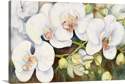 Stem Of Orchids