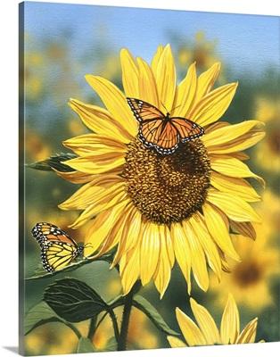 Sunflower, Butterflies