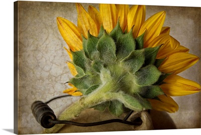 Sunflower With Handle