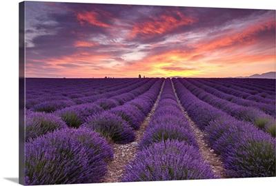 Sunrise over Lavender