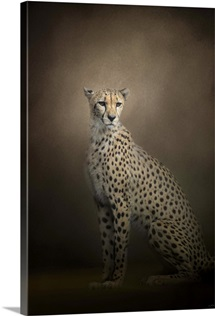 The Elegant Cheetah