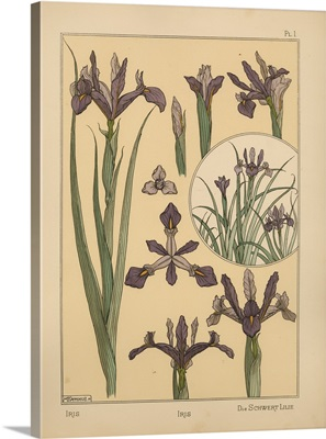 The Plant and its Ornamental Applications, Plate 1 - Iris