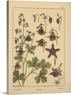 The Plant and its Ornamental Applications, Plate 10 - Columbine
