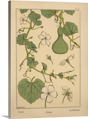The Plant and its Ornamental Applications, Plate 13 - Gourd