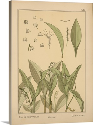 The Plant and its Ornamental Applications, Plate 37 - Lily of the Valley