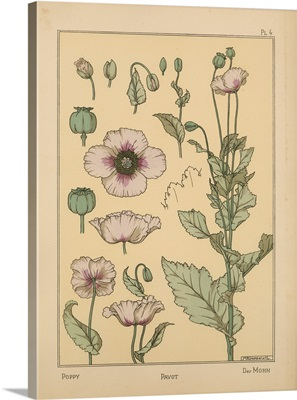 The Plant and its Ornamental Applications, Plate 4 - Poppy