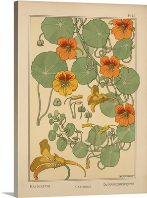 The Plant and its Ornamental Applications, Plate 40 - Nasturtium